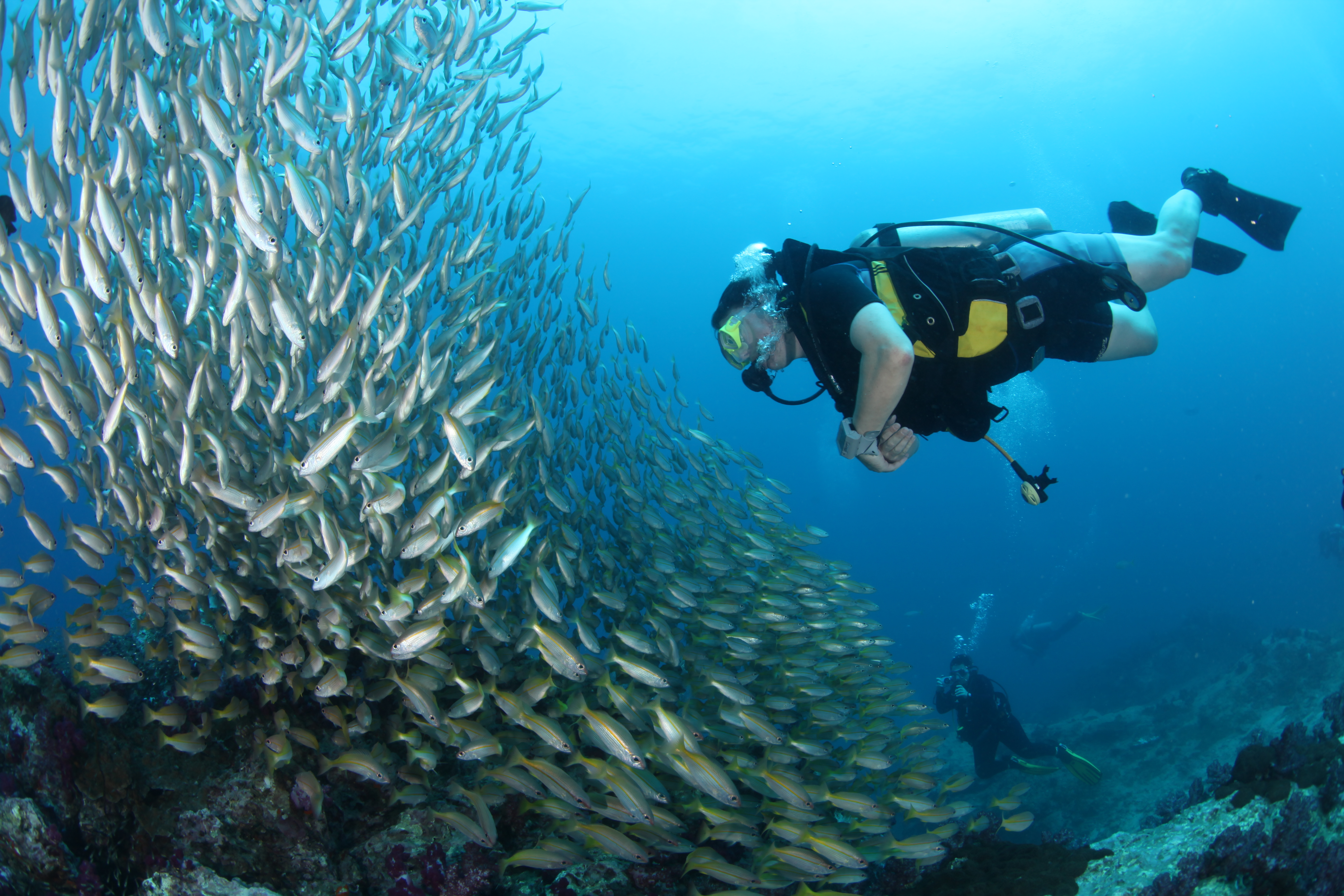 scuba_diving_with_fish